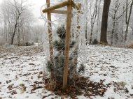 frisch bereifter Baum
