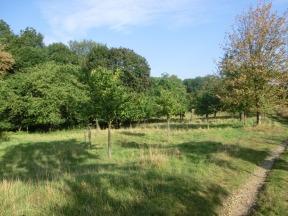 Neupflanzungen als Ersatz abgestorbener Bäume