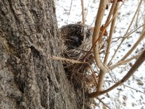 Glücksfund - ein Vogelnest in Bodennähe