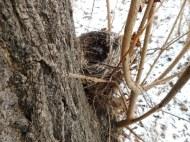 Nester findet man am besten in Winter