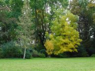Beginnende Herbstfärbung